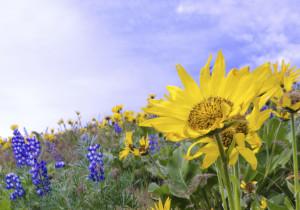 gorge flowershp